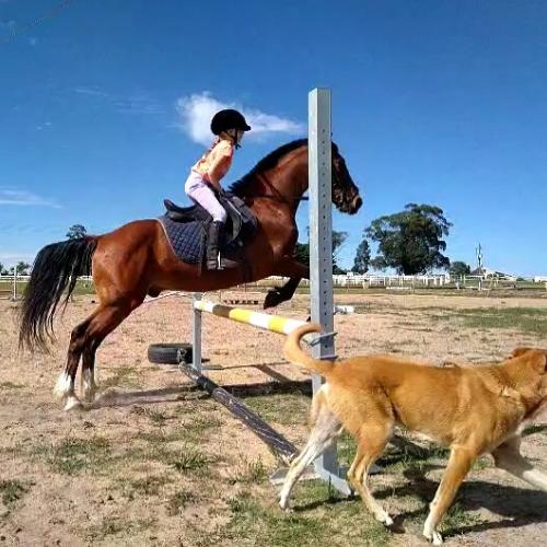 Horse Riding Lessons | Equine Sport Centre