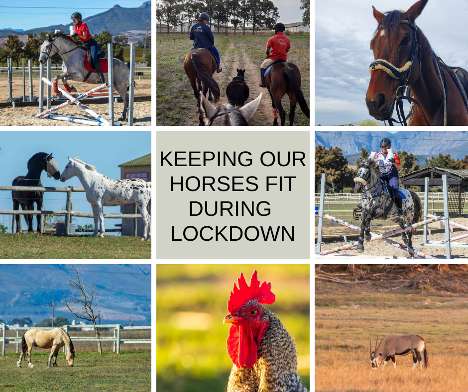 Keeping our horses fit