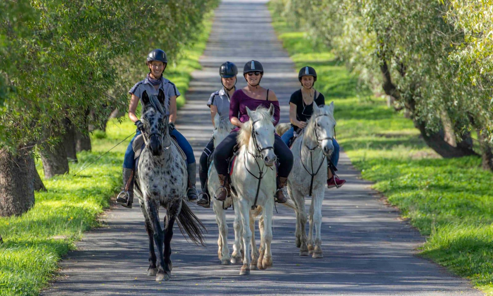 Equine sport Outride